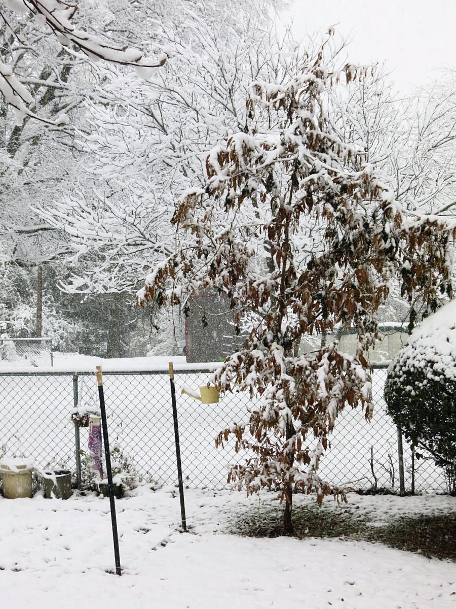 前后院的雪景_图1-4