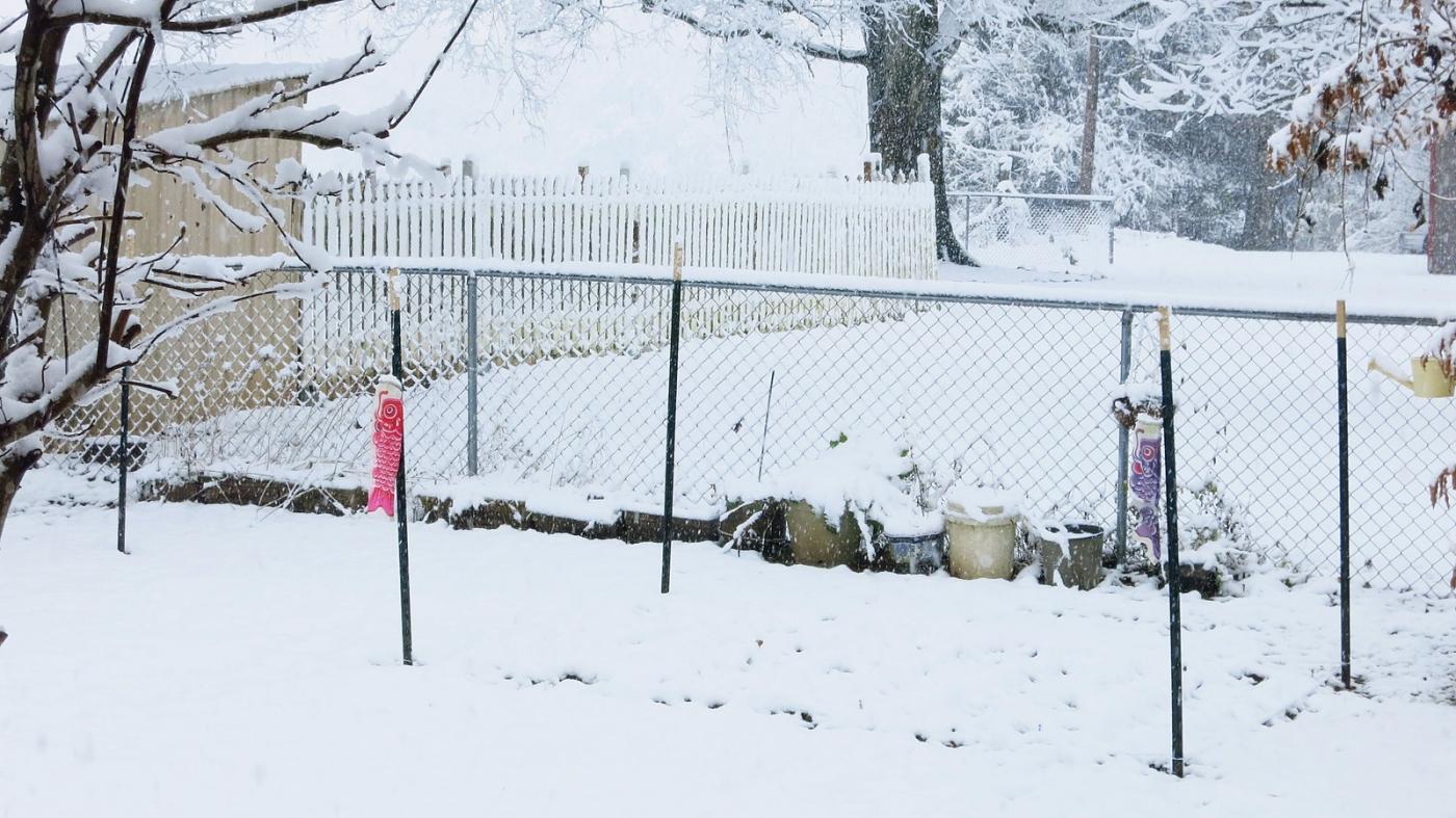 前后院的雪景_图1-5