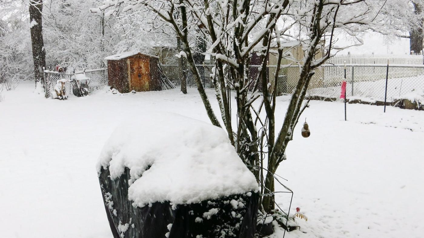前后院的雪景_图1-6