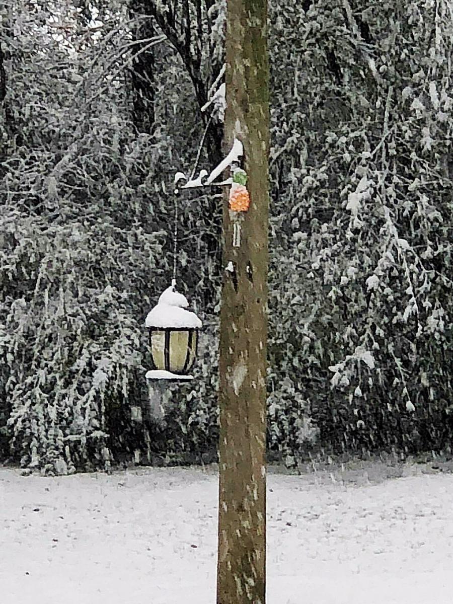 前后院的雪景_图1-10