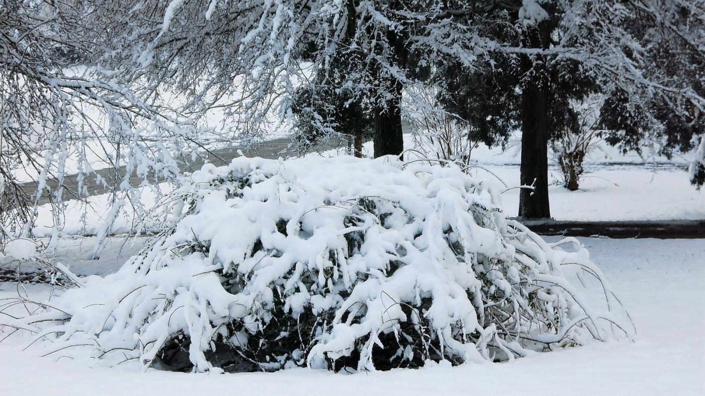 前后院的雪景_图1-17