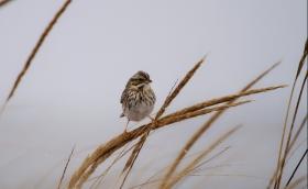 【田螺摄影】雪天拍鸟的记录