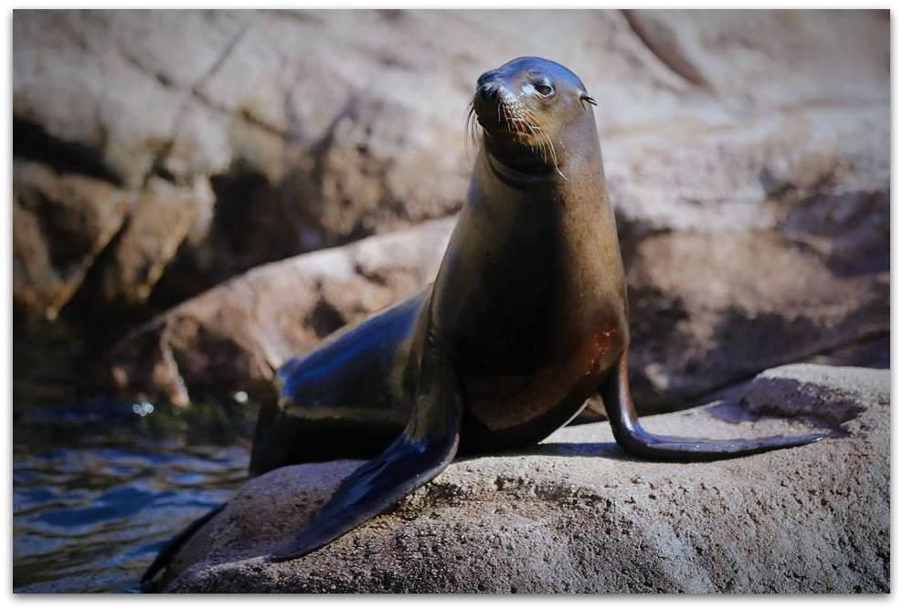 【爱摄影】动物园里的海狮_图1-3