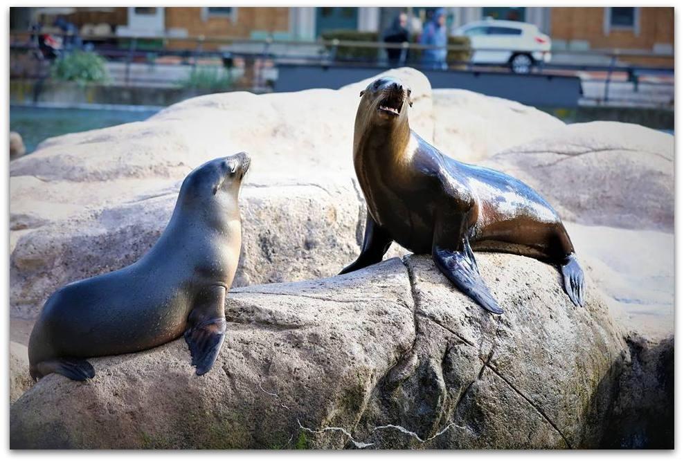 【爱摄影】动物园里的海狮_图1-5