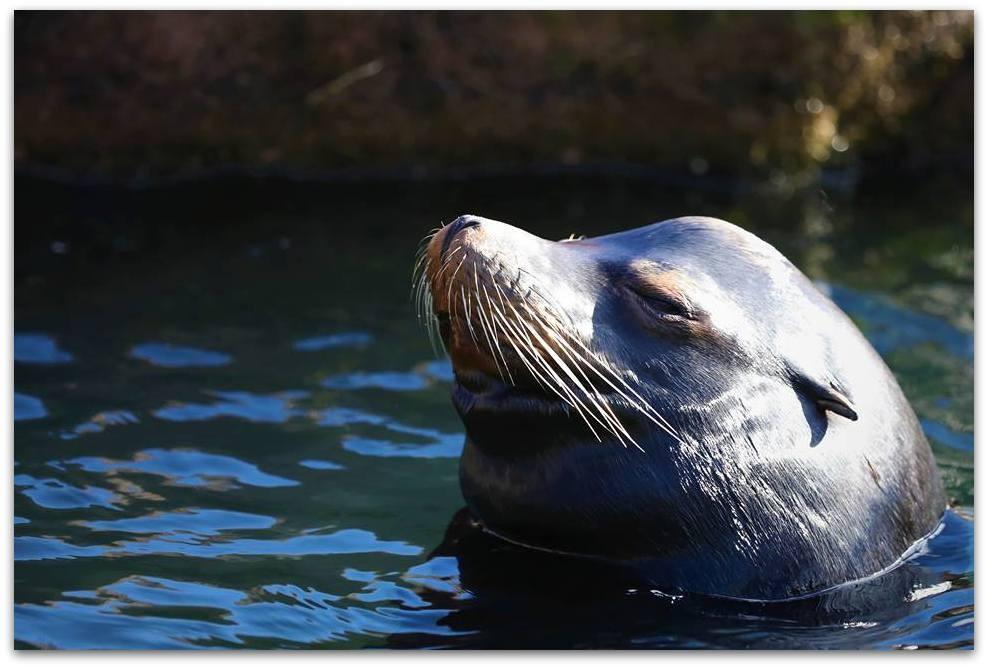 【爱摄影】动物园里的海狮_图1-7