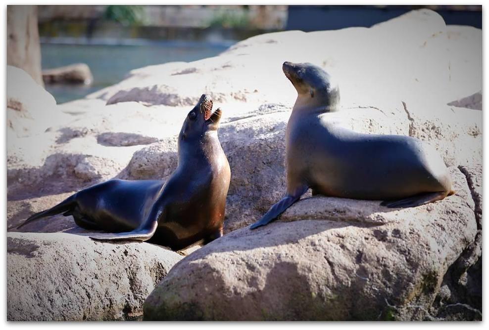 【爱摄影】动物园里的海狮_图1-10