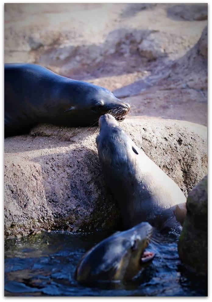 【爱摄影】动物园里的海狮_图1-12