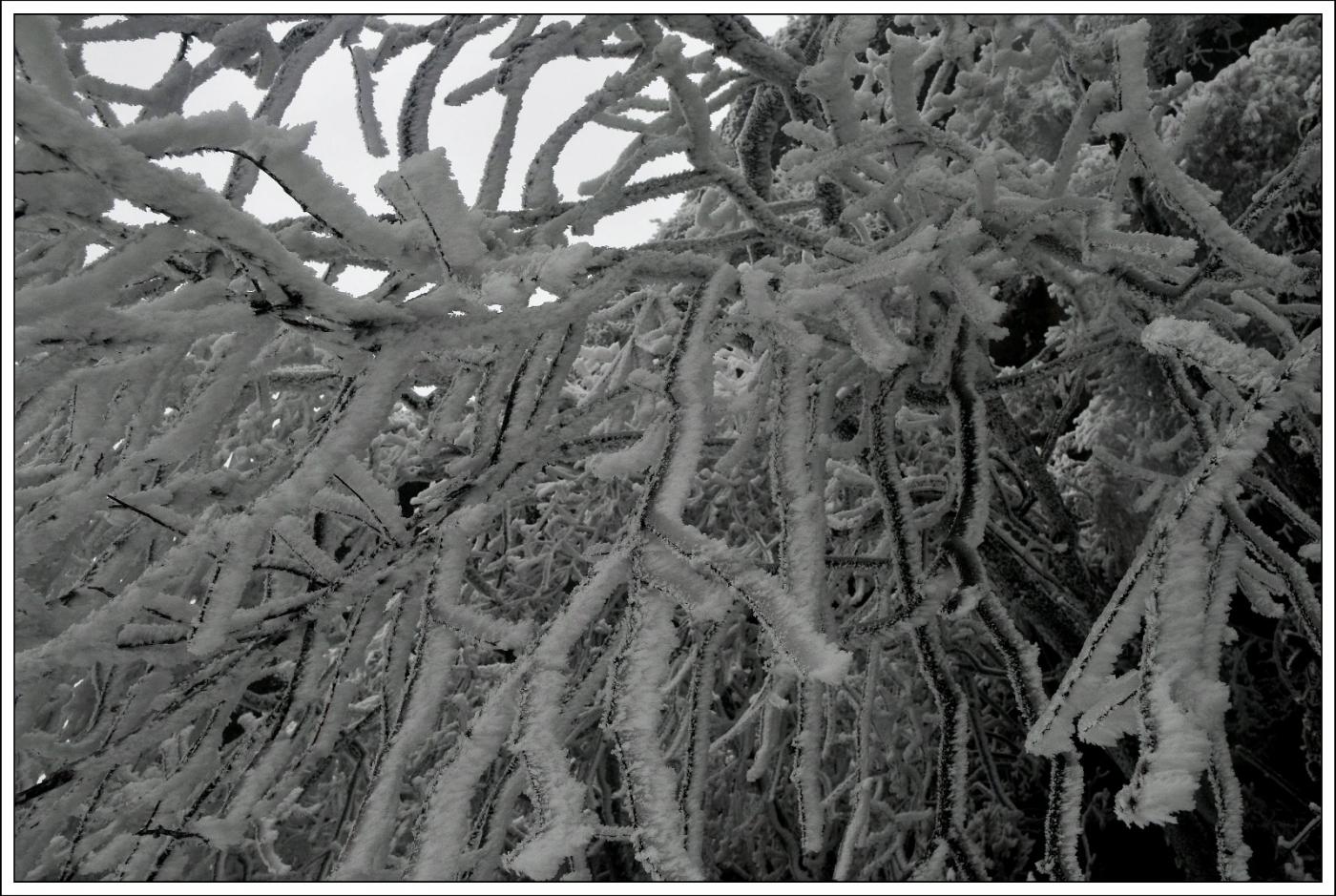 武陵源的雪(一)_图1-9