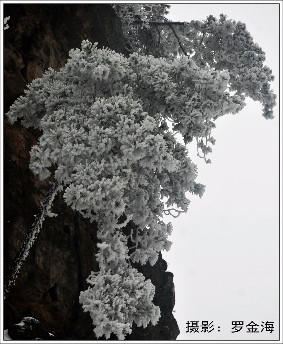 武陵源的雪(一)_图1-11