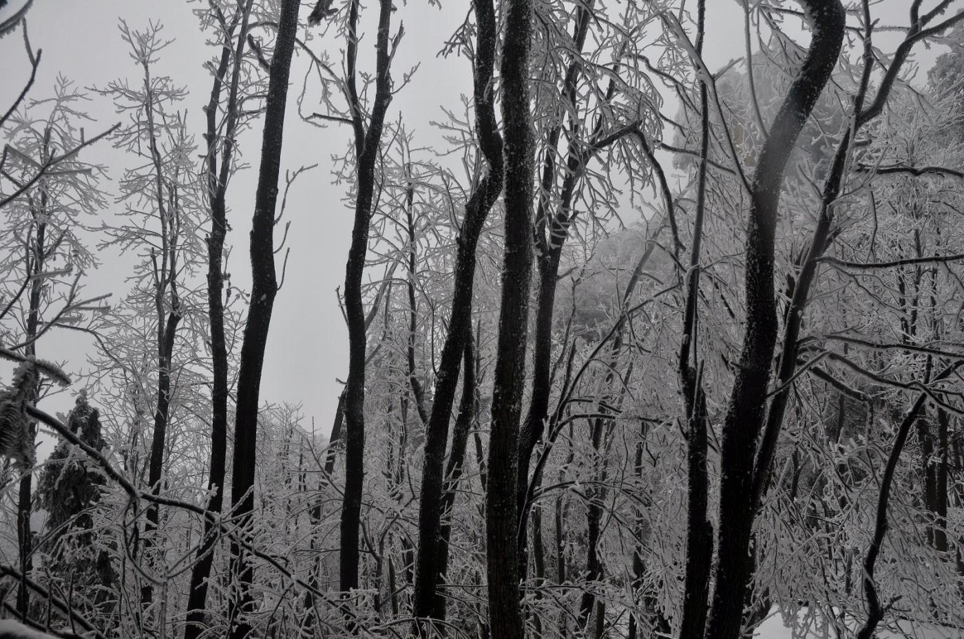 武陵源的雪(一)_图1-17