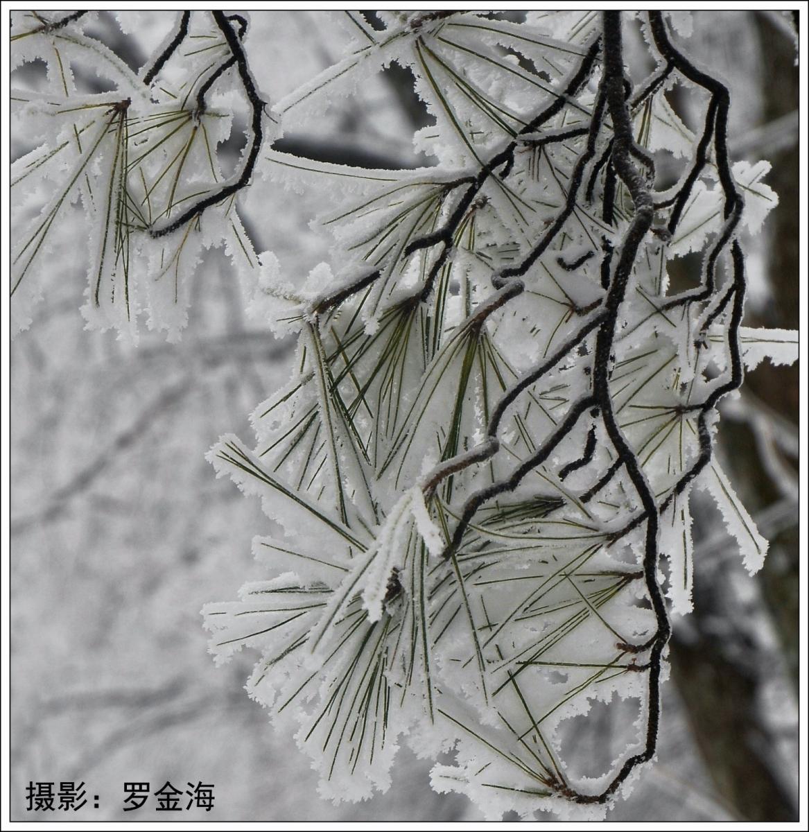武陵源的雪(一)_图1-18