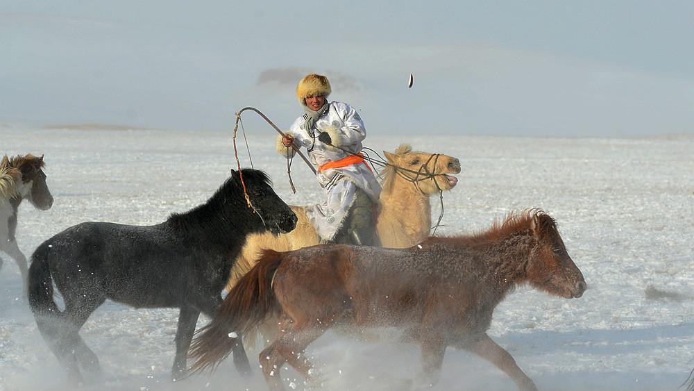乌兰布统行摄---套马的汉子_图1-1