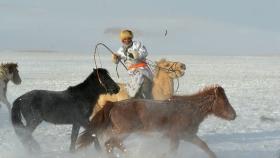 乌兰布统行摄---套马的汉子