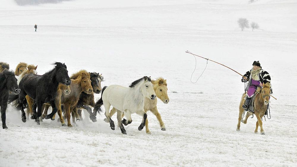 乌兰布统行摄---套马的汉子_图1-2