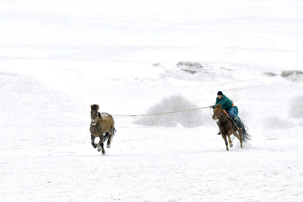 乌兰布统行摄---套马的汉子_图1-5