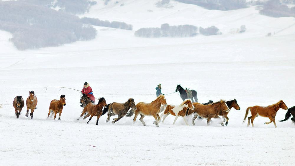 乌兰布统行摄---套马的汉子_图1-7