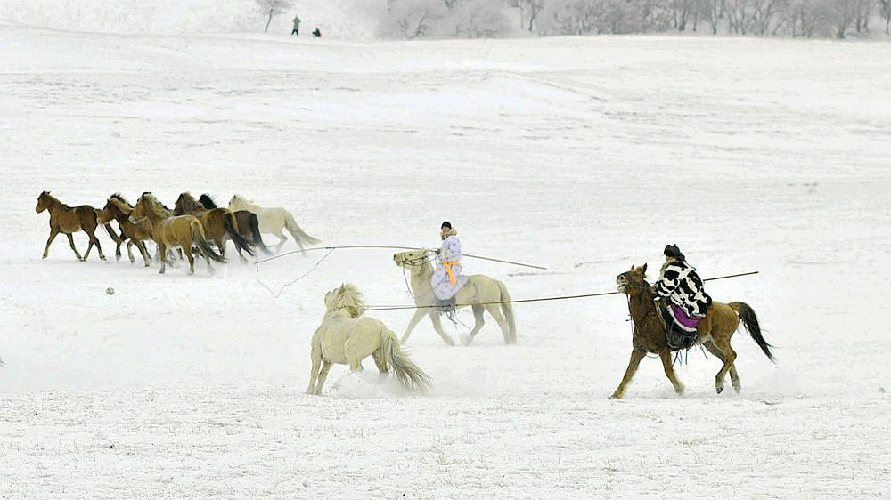 乌兰布统行摄---套马的汉子_图1-8