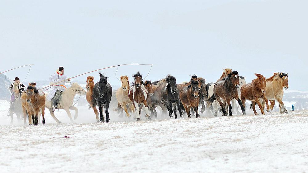 乌兰布统行摄---套马的汉子_图1-9