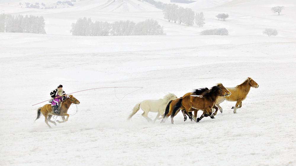 乌兰布统行摄---套马的汉子_图1-10