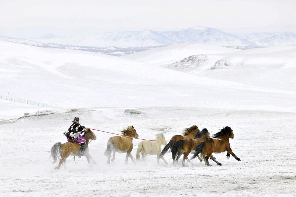 乌兰布统行摄---套马的汉子_图1-11