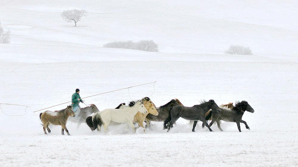 乌兰布统行摄---套马的汉子_图1-13