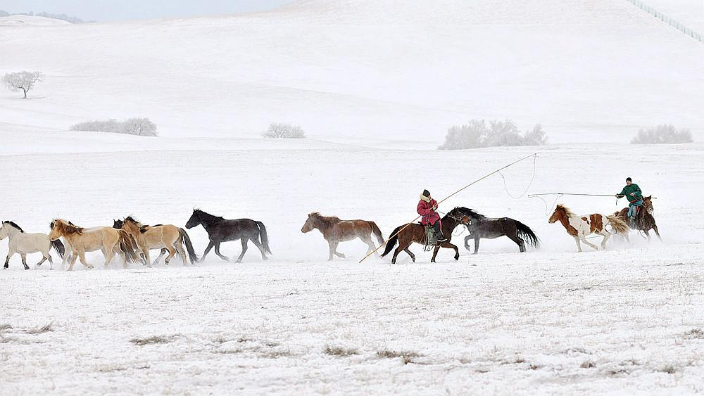 乌兰布统行摄---套马的汉子_图1-14