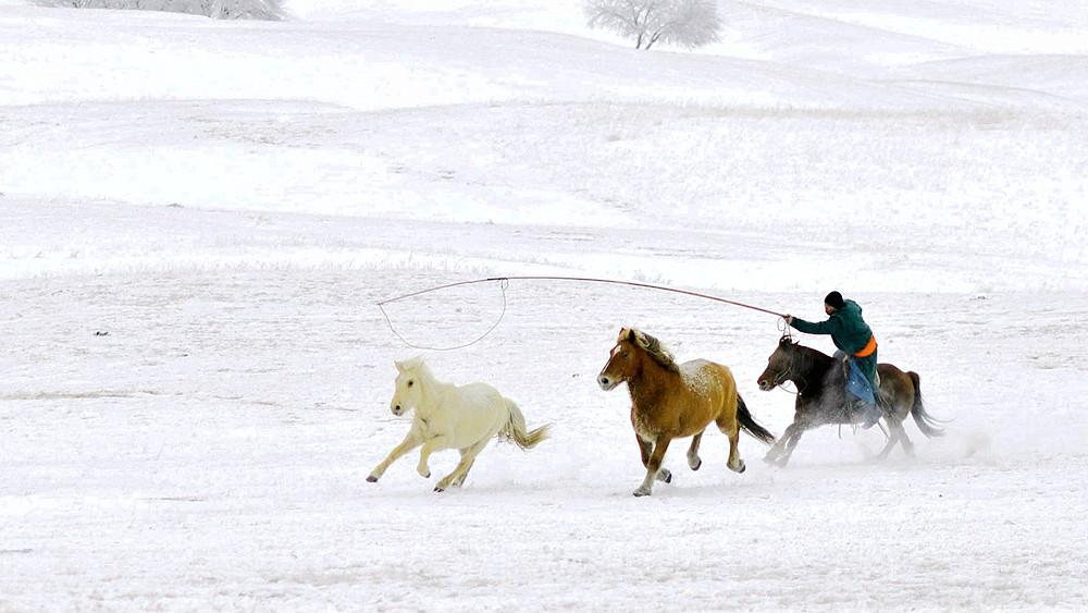 乌兰布统行摄---套马的汉子_图1-15