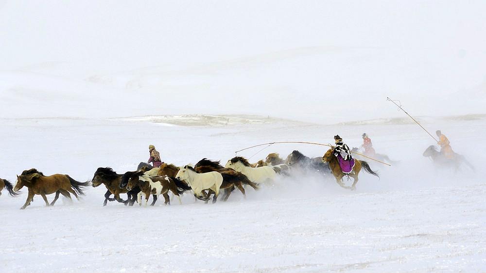 乌兰布统行摄---套马的汉子_图1-16