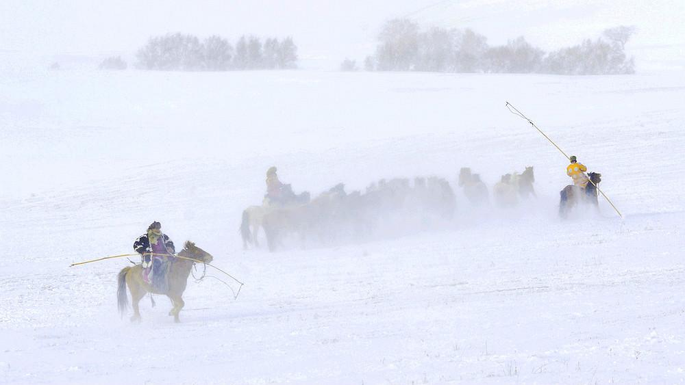 乌兰布统行摄---套马的汉子_图1-17