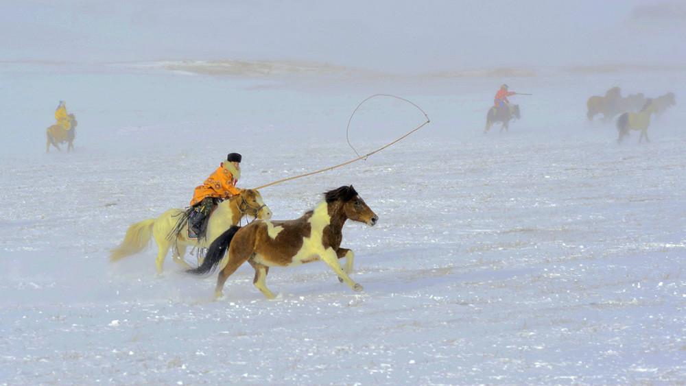 乌兰布统行摄---套马的汉子_图1-18