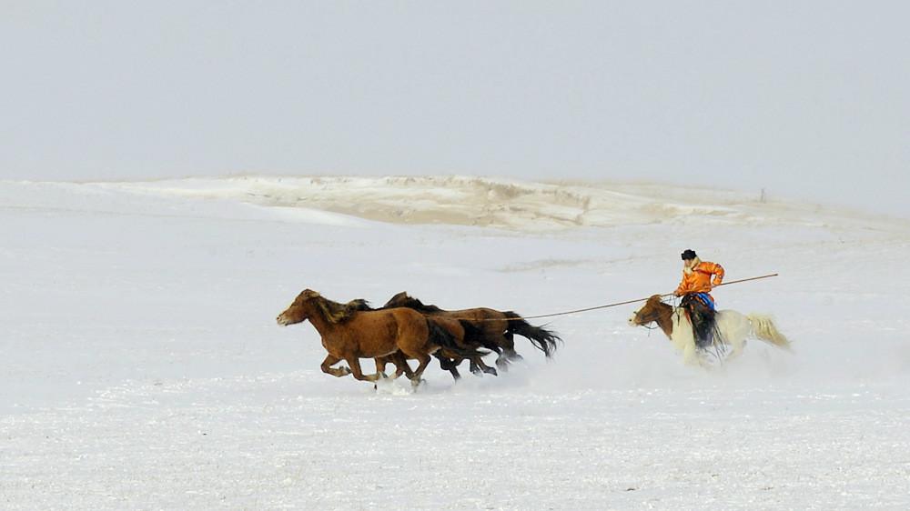 乌兰布统行摄---套马的汉子_图1-19