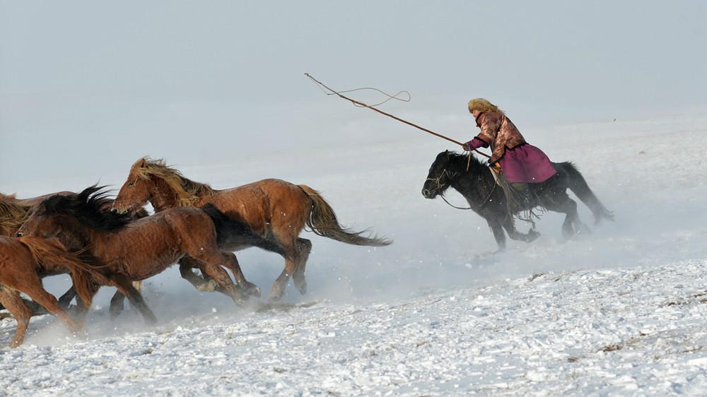 乌兰布统行摄---套马的汉子_图1-20