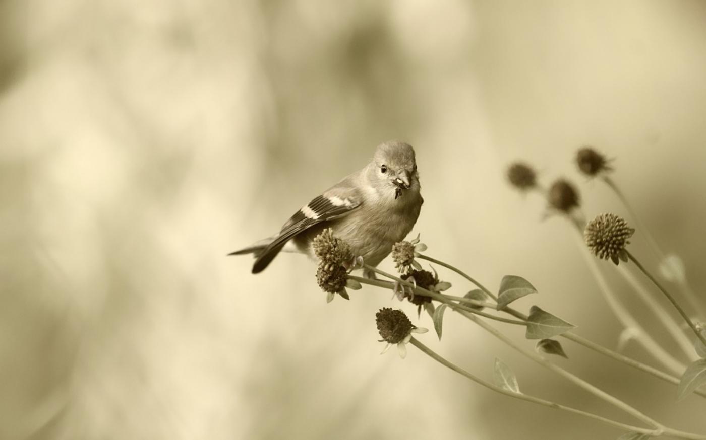 [田螺摄影]金翅鸟_图1-2