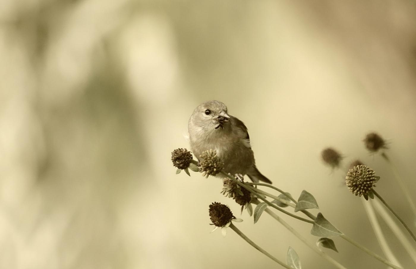 [田螺摄影]金翅鸟_图1-3