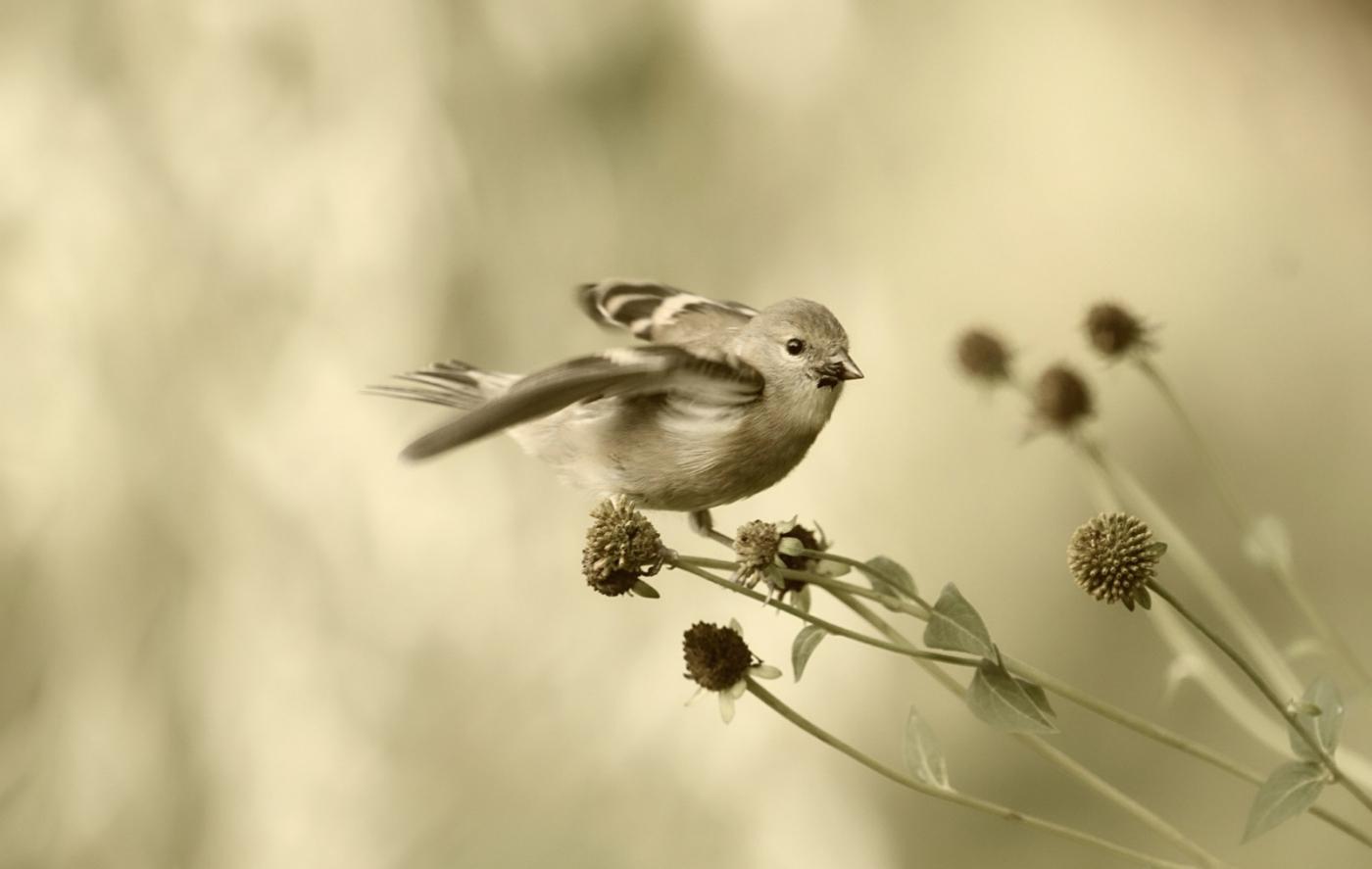 [田螺摄影]金翅鸟_图1-4