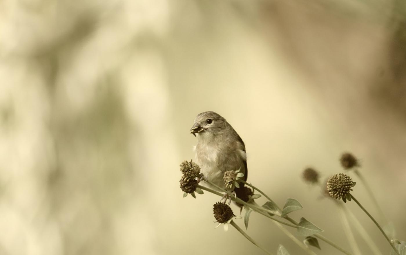 [田螺摄影]金翅鸟_图1-6