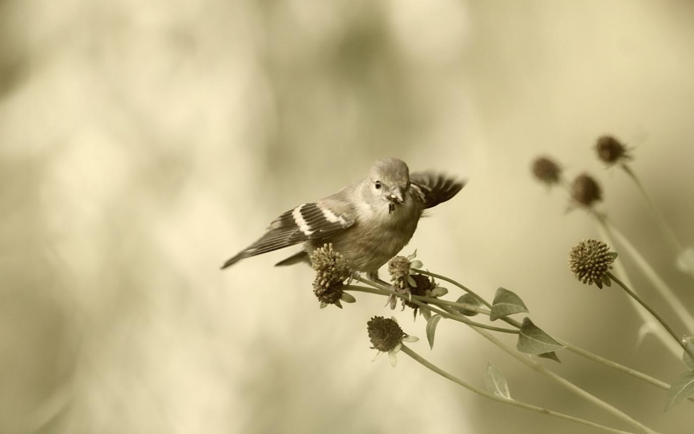 [田螺摄影]金翅鸟_图1-7