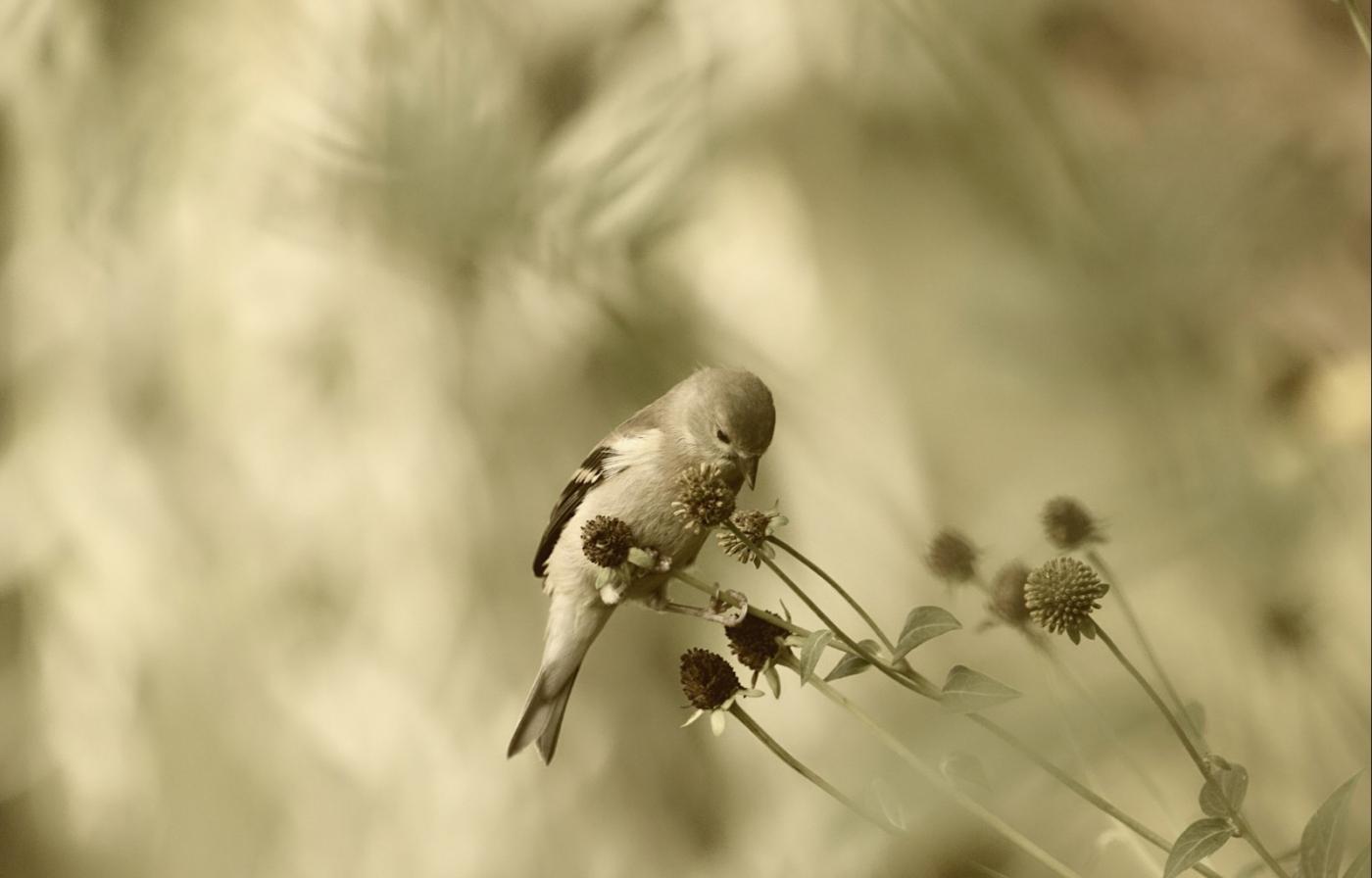 [田螺摄影]金翅鸟_图1-9