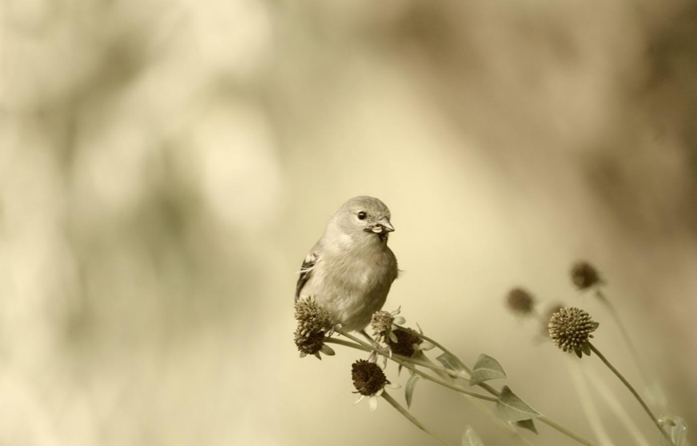 [田螺摄影]金翅鸟_图1-12