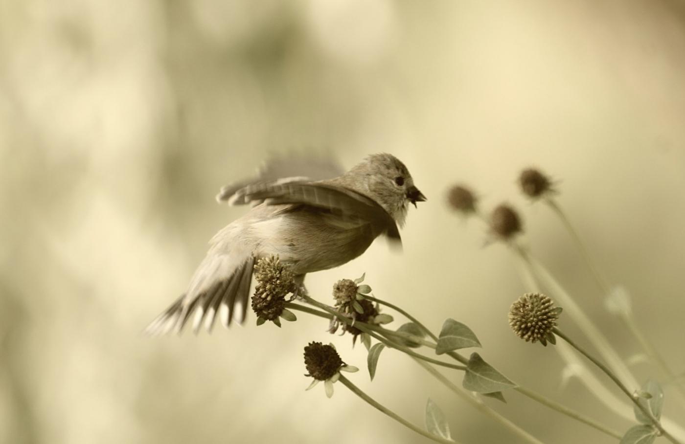 [田螺摄影]金翅鸟_图1-11