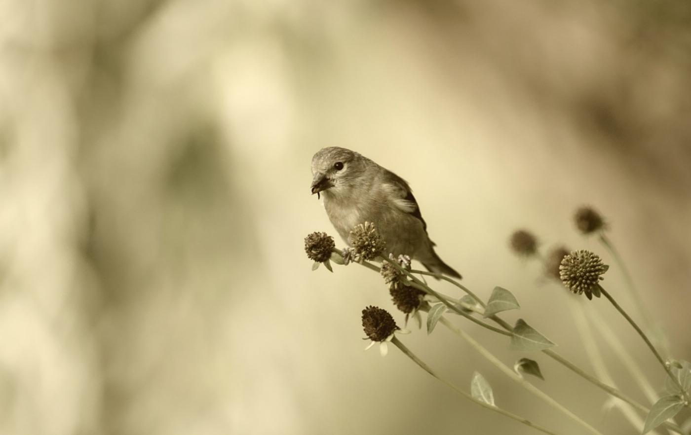 [田螺摄影]金翅鸟_图1-13