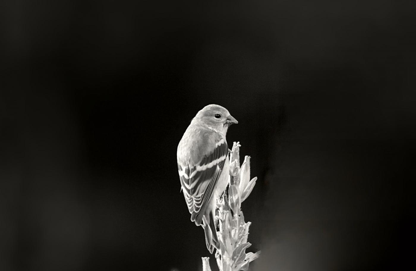 [田螺摄影]金翅鸟_图1-15