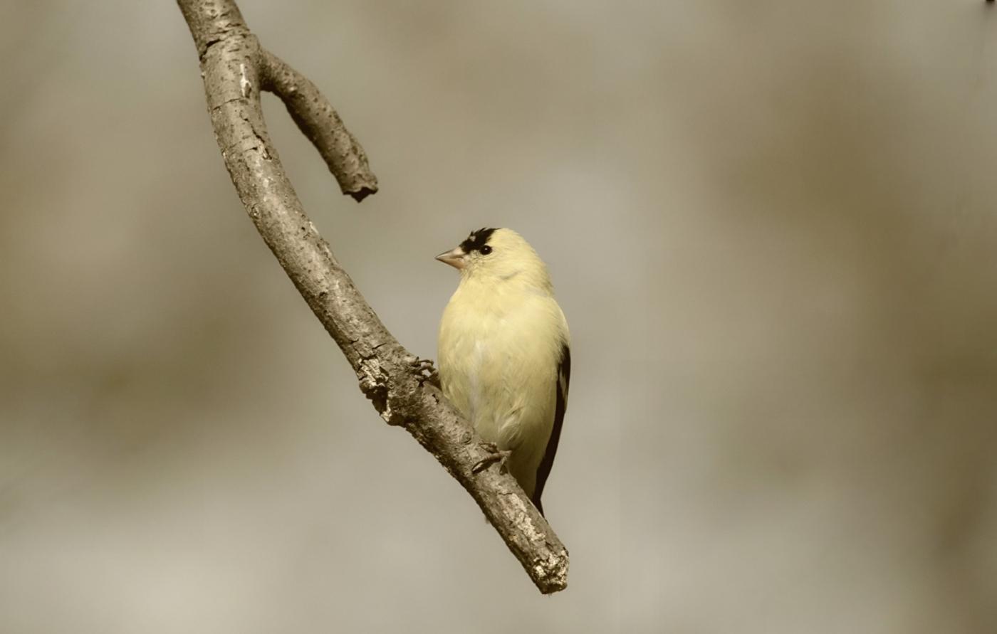 [田螺摄影]金翅鸟_图1-14