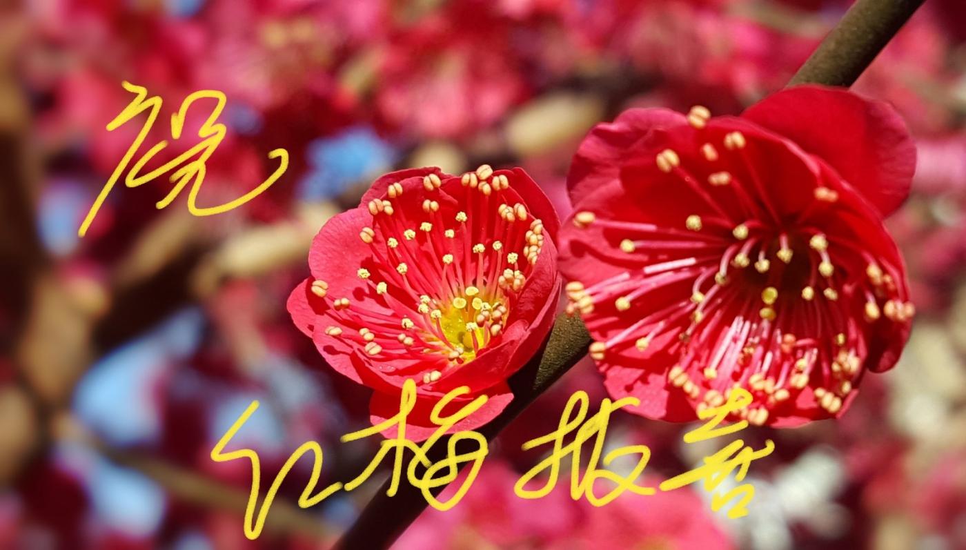 〔田螺攝影〕把祝福寫進花開里 新年好!_圖1-2