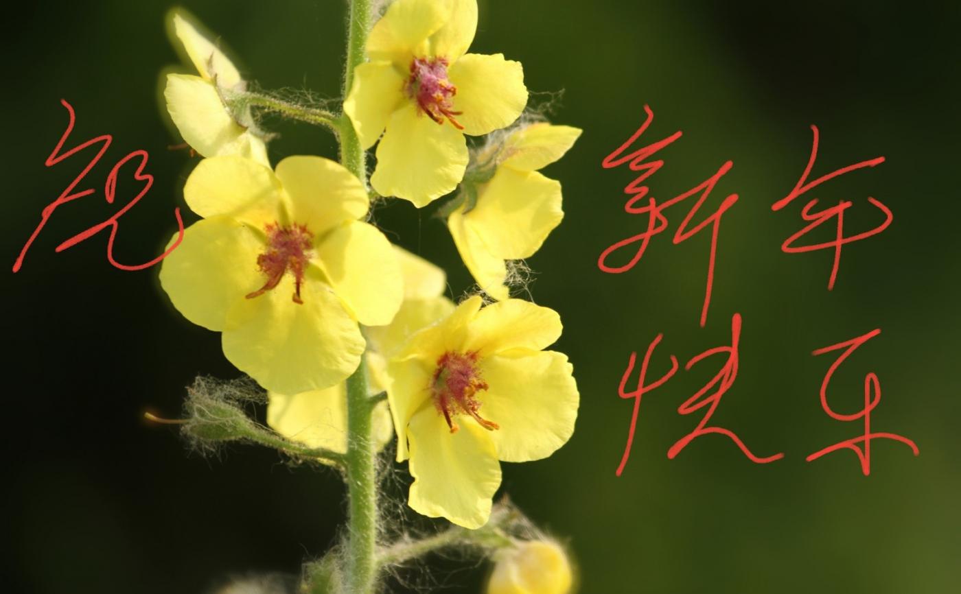 [田螺摄影]把祝福写进花开里 新年好!_图1-3