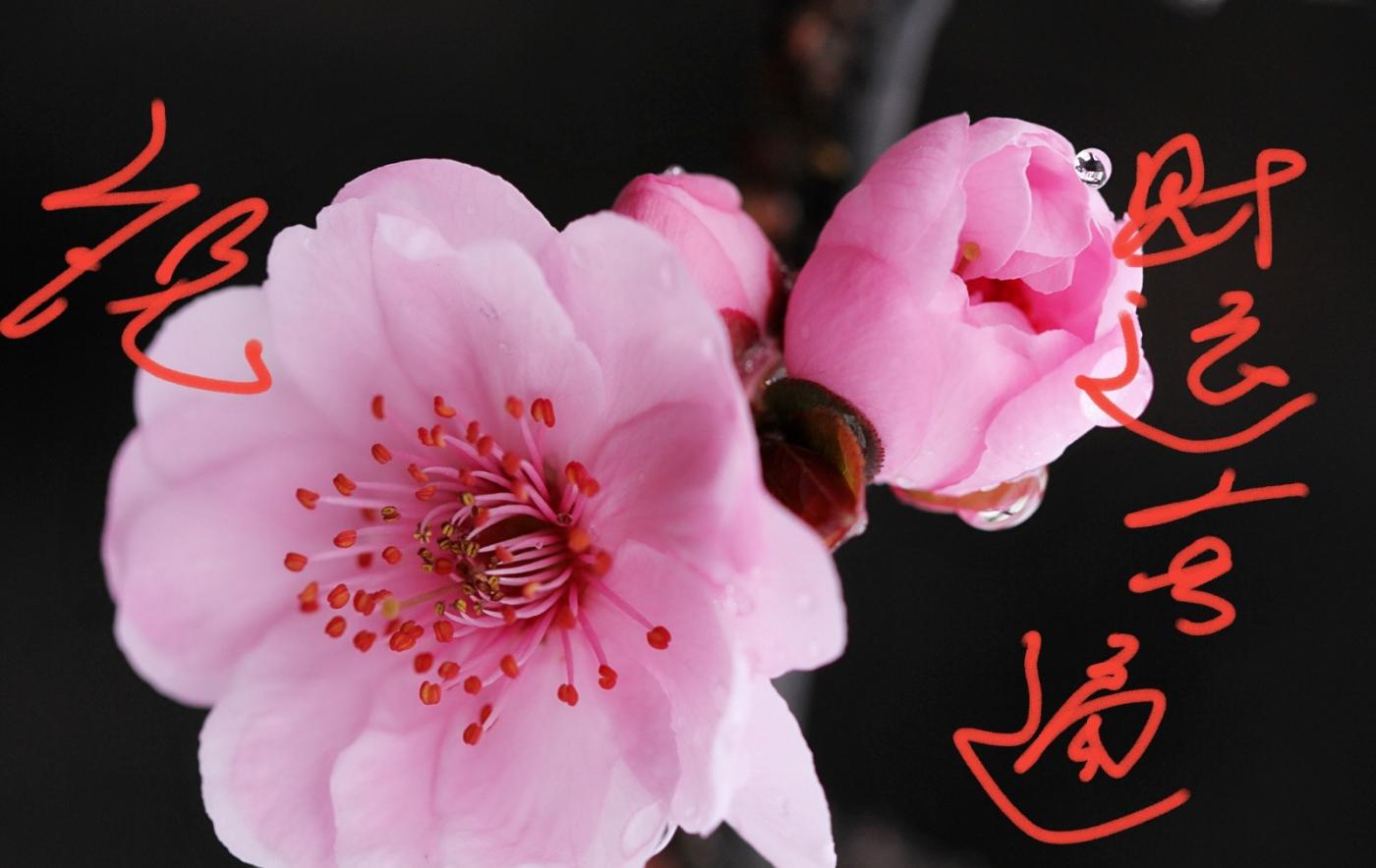 〔田螺攝影〕把祝福寫進花開里 新年好!_圖1-5