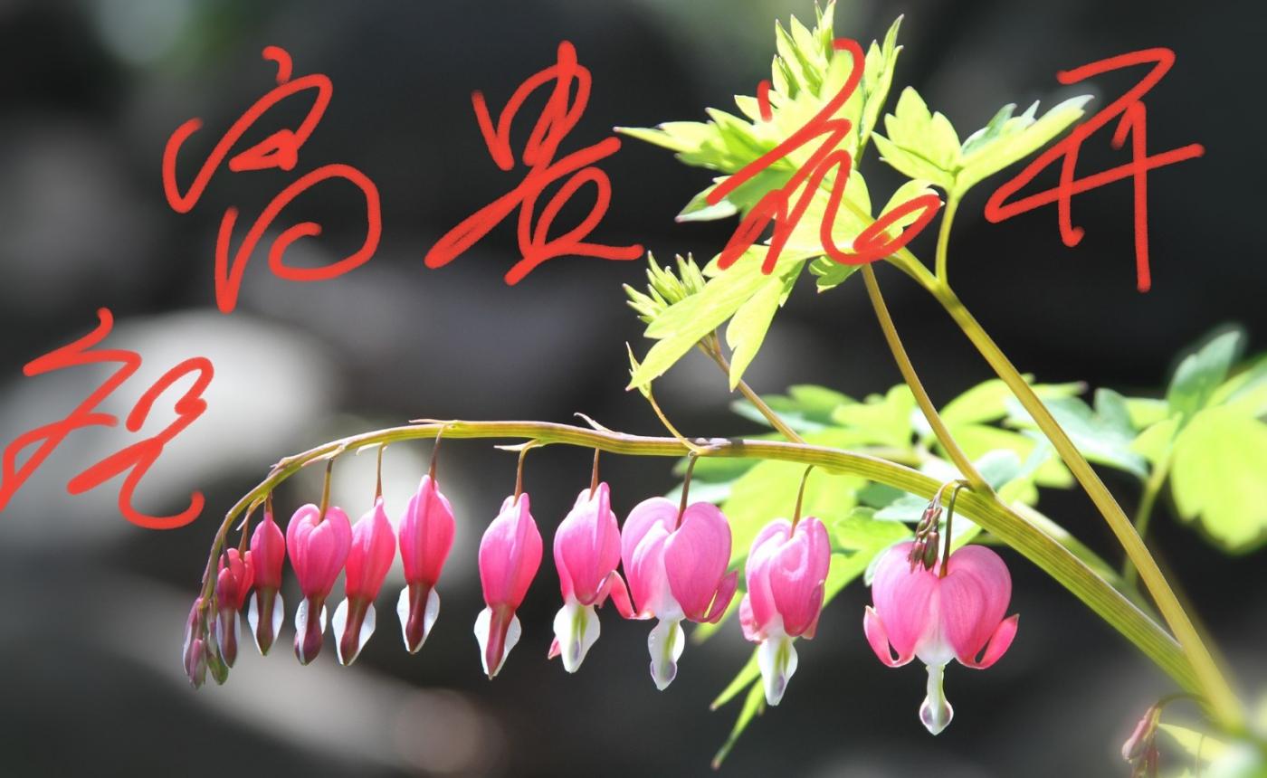 [田螺摄影]把祝福写进花开里 新年好!_图1-6