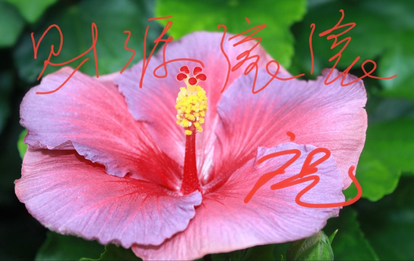 [田螺摄影]把祝福写进花开里 新年好!_图1-8