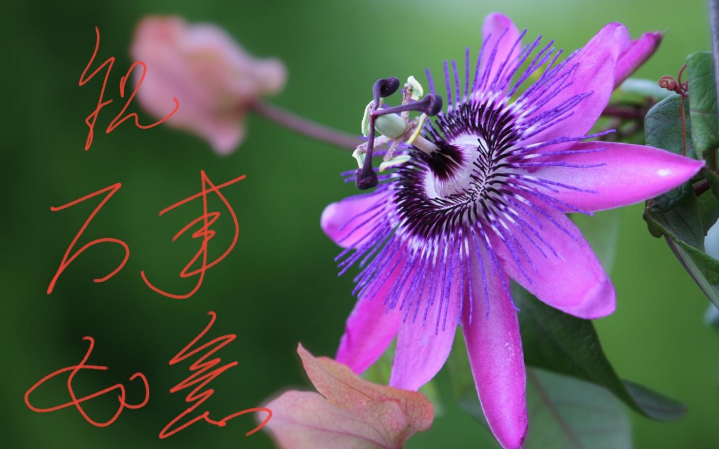 〔田螺攝影〕把祝福寫進花開里 新年好!_圖1-7