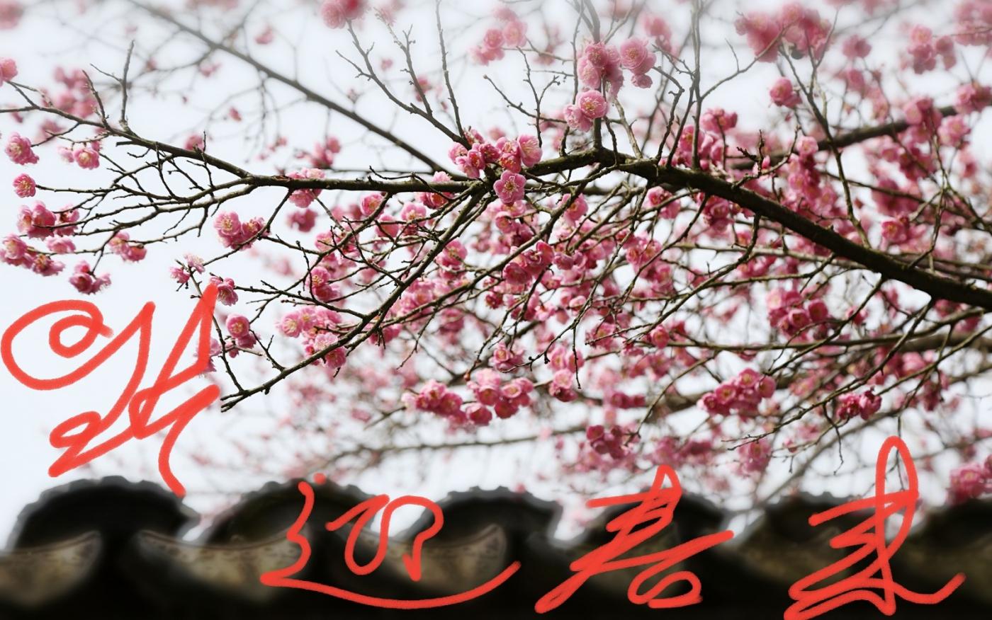 [田螺摄影]把祝福写进花开里 新年好!_图1-10